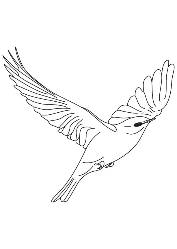 Bright Bluebird Flying Coloring Page | Download Free Bright - AZ ...