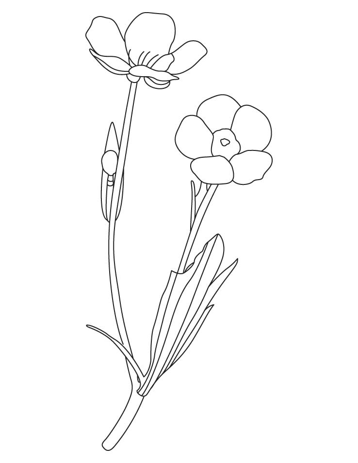 Yellow spring flower coloring pages | Download Free Yellow spring