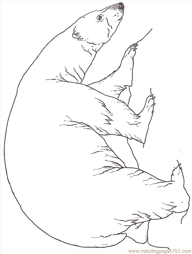 coloring pages mural tsb polar bear reversed  mammals